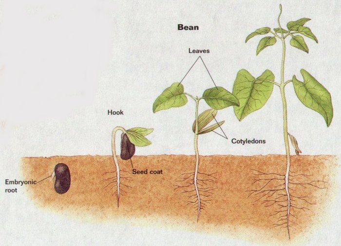 B2 Sexual Reproduction In Plants Lydiagrain