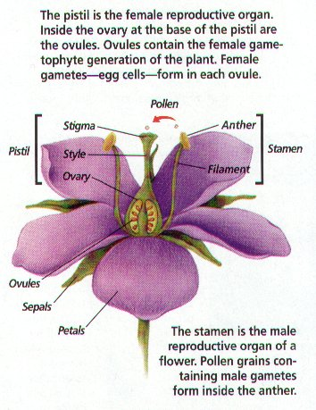 Plant reproduction monocot flower parts are arranged in multiple of threes while dicots are in multiples of four or ccuart Image collections