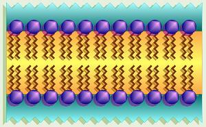 [Image: membrane.jpg]