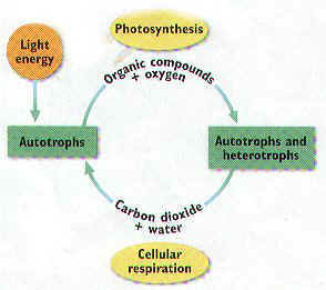 Photosynthesis notes iii biochemical pathways photosynthesis ccuart Image collections
