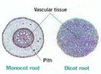 Plant Structure Bi - BIOLOGY JUNCTION