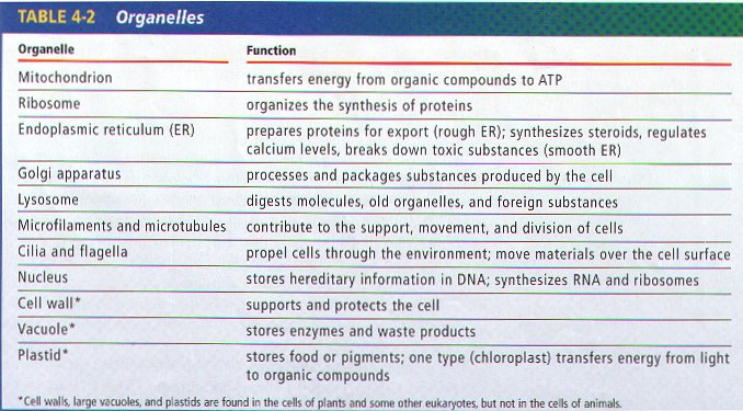 animal cell organelles & their functions essay Complete the following table by writing the name of the cell part or organelle in  the  found in plant cells, animal cells or both organelle plant cells animal.