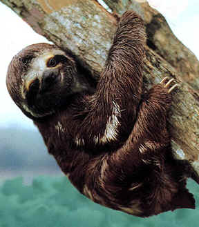 photo of baby sloth