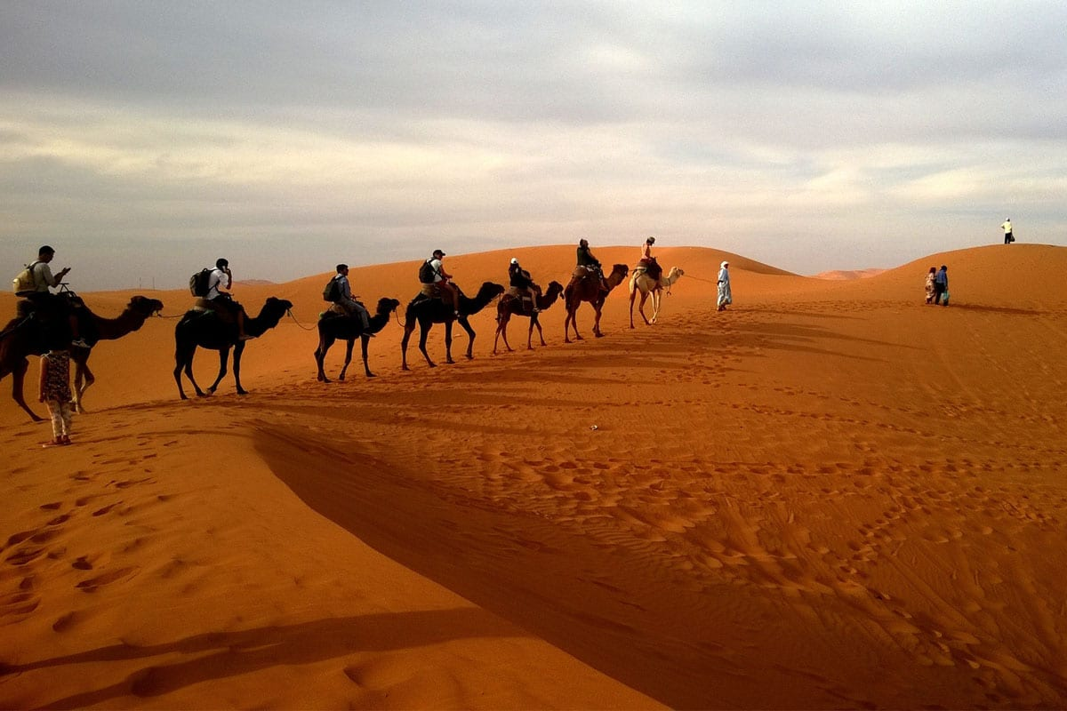 desert with camels