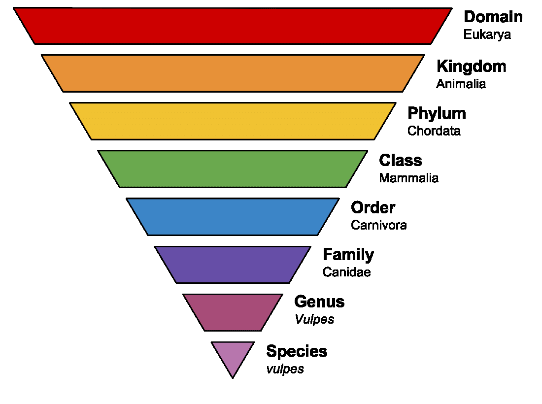 Classification of Living Things: Definition, Examples, and