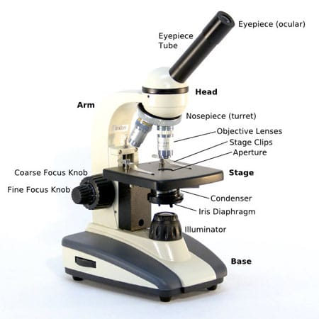 microscope diagram