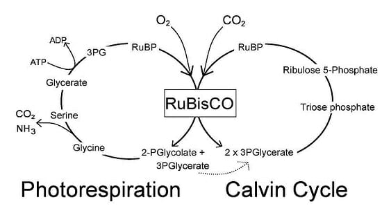 Simplified-Calvin-Cycle-diagram