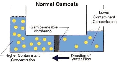 normal osmosis