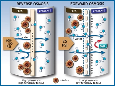 types of osmosis