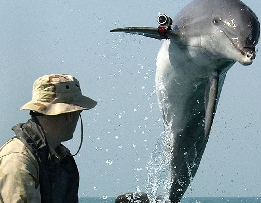 A marine biologist trained a dolphin
